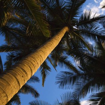 Low angle view of palm tree.