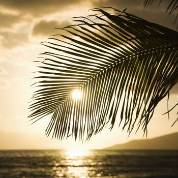 Palm trees silhouetted against sun setting over Pacific ocean in Maui, Hawaii.