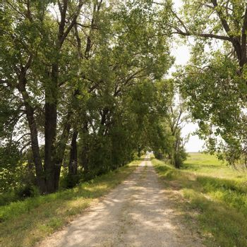 Scenic tree lined rural gravel road in country.