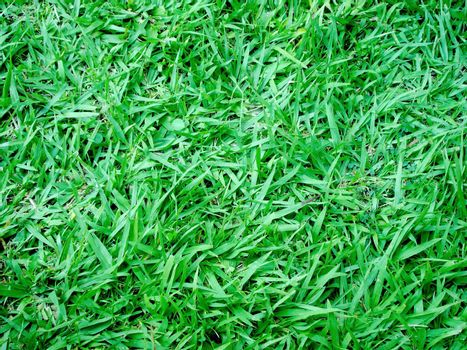 green grass texture on soccer field. photo image