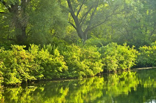 Green reflections in water