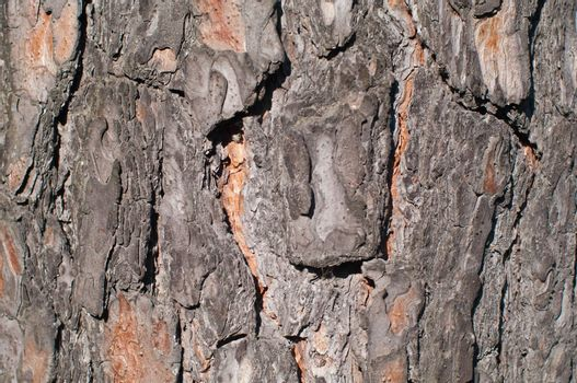 Pine bark texture, pattern horizontal