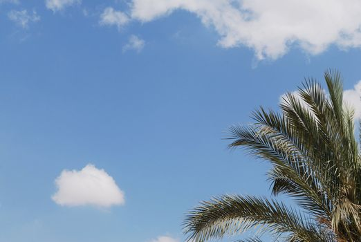 Palm tree leaves against sky background