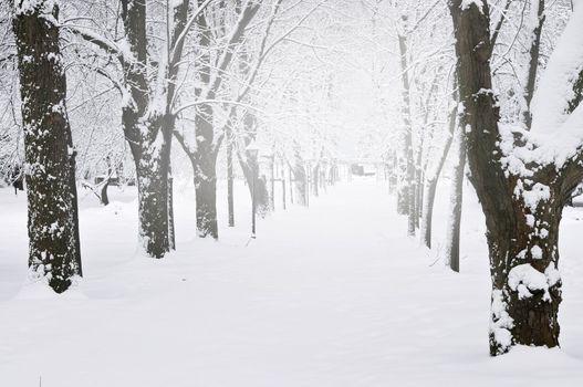 Lane in winter park