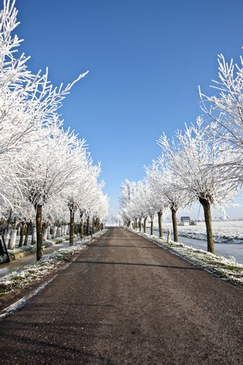 Countryroad in wintertime