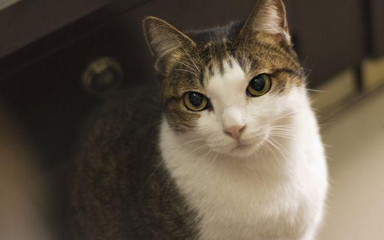 Indoor Cat Eyes