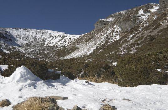Snow Alpine