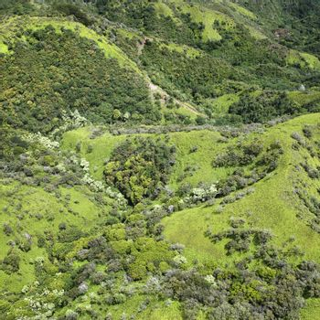 Aerial view of rolling rainforest hills in Maui, Hawaii.