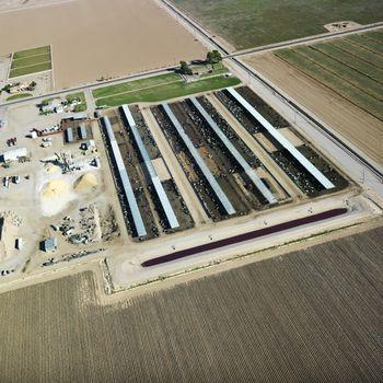 Livestock farm aerial.