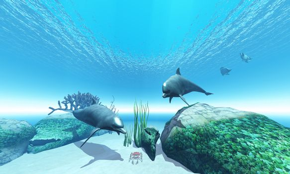 Two Bottlenose dolphins take an interest in a crab while two Butterfly fish make their getaway.