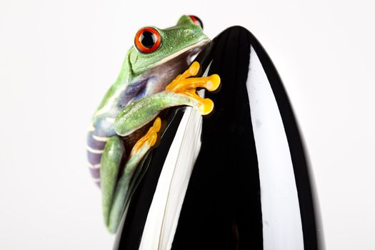 Frog - small animal with smooth skin and long legs that are used for jumping.