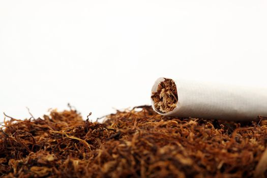 tabacco crop
