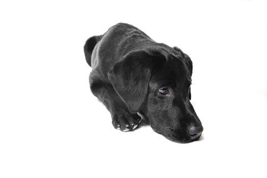 black doggy