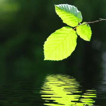 green leave and water