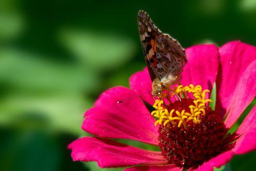 Wild-flower. Butterfly