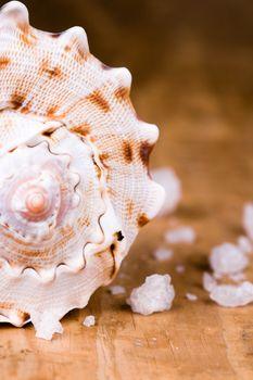 seashell and salt