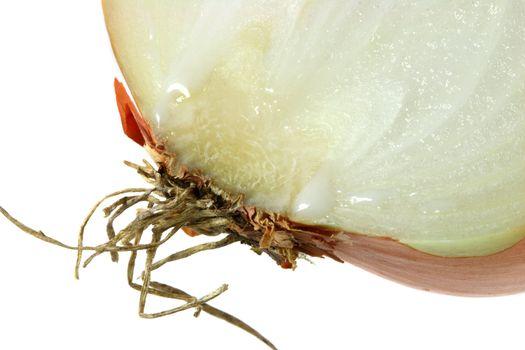 half sliced onion super macro shot