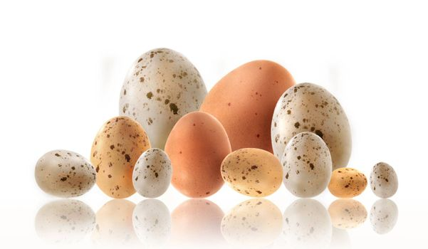 Different size eggs with reflection on white