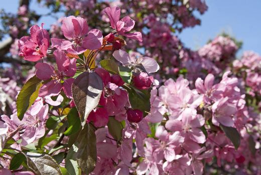 Trees blooming in a spring orchid