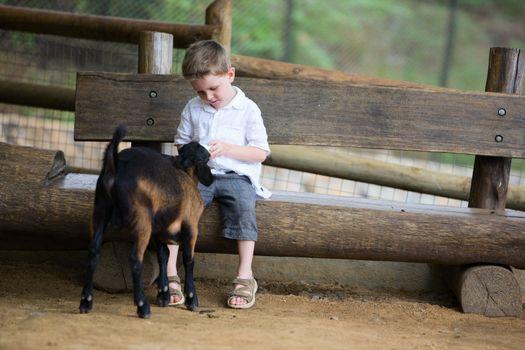 Feeding Baby Goat