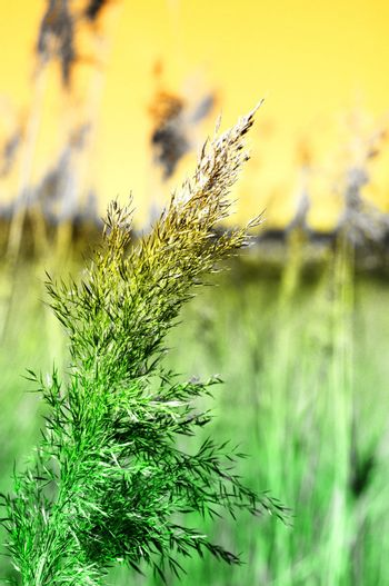 meadow in vibrant abstract colors