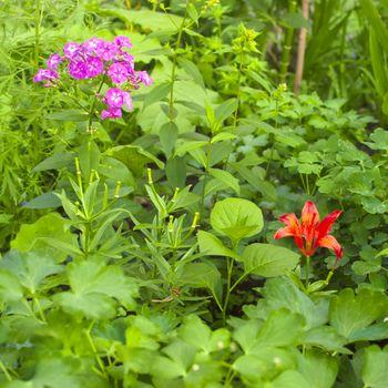 Garden florets