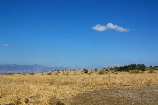 blue sky field 2