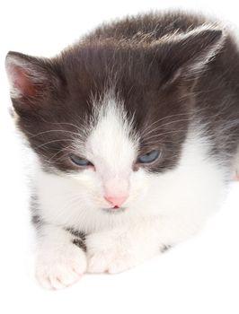 close-up small kitten lying