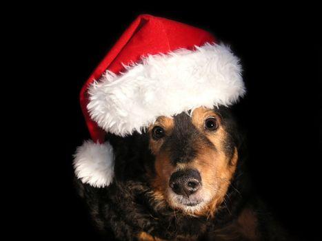 dog wanting to help santa deliver presents