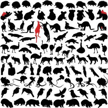 Hundred silhouettes of wild rare animals from Australia, Tanzania and New Zealand