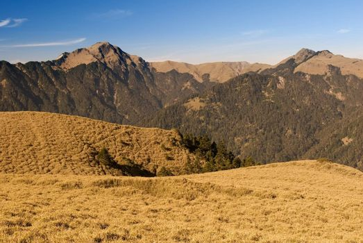 Mountain landscape with golden grassland in the morning.