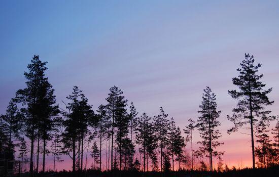 sunrise in chantrellwood