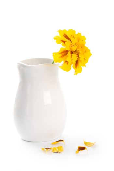 marigold flower in vase