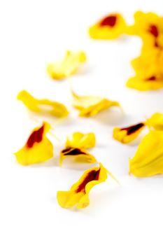 marigold flowers petals