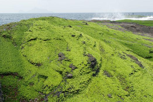 Green Rock Land