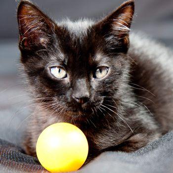 Kitten next to a ball