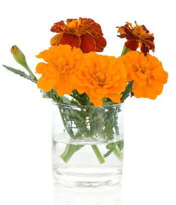 close-up bunch of marigolds in glass, isolated on white