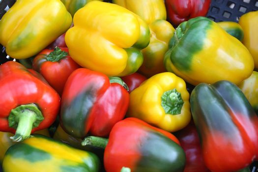 Fresh green, red and yellow peppers