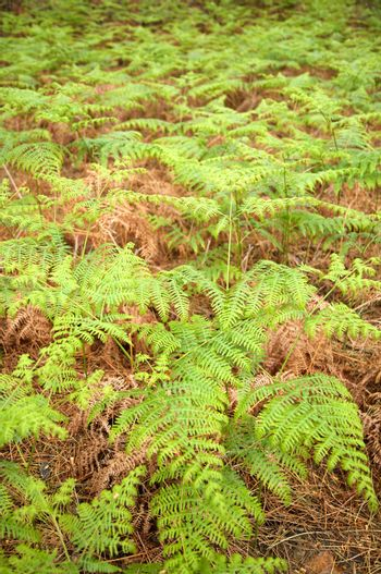 green and brown fern
