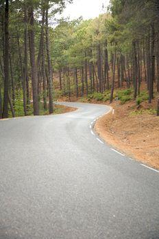 asphalt on the forest