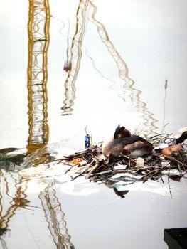 Nesting Bird On Docklands Water