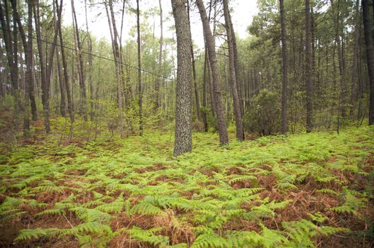 forest with fern