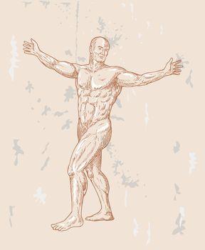 male human anatomy