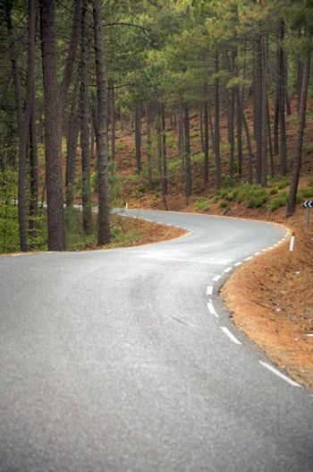 two curves at the forest