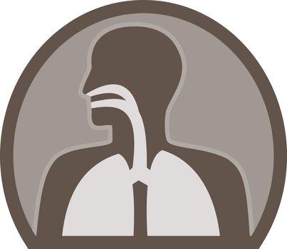 human anatomy respiratory organ