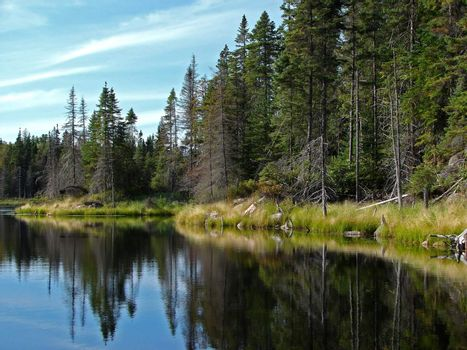 Northern lake and coniferous trees