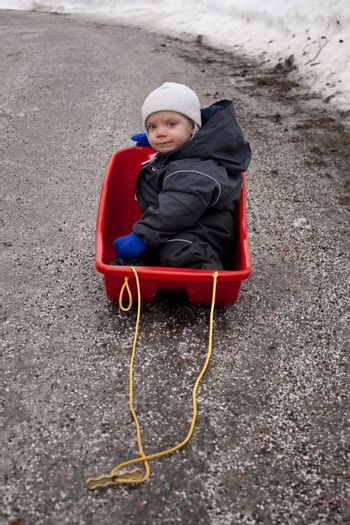 Baby sitting in a sled on an almost snow free road.