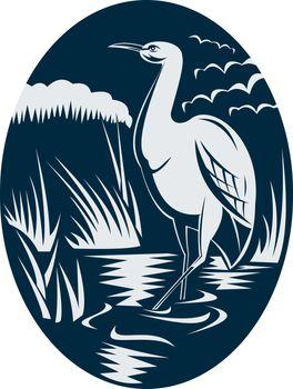 Heron wading in the marsh or swamp