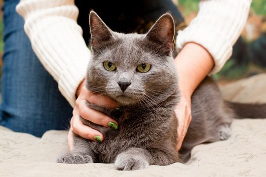 A gray cat and a women hand