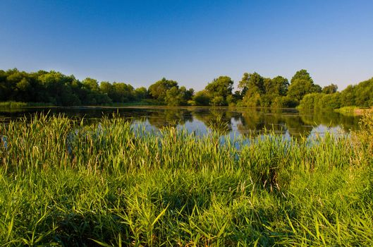 rushy pond  in summer day